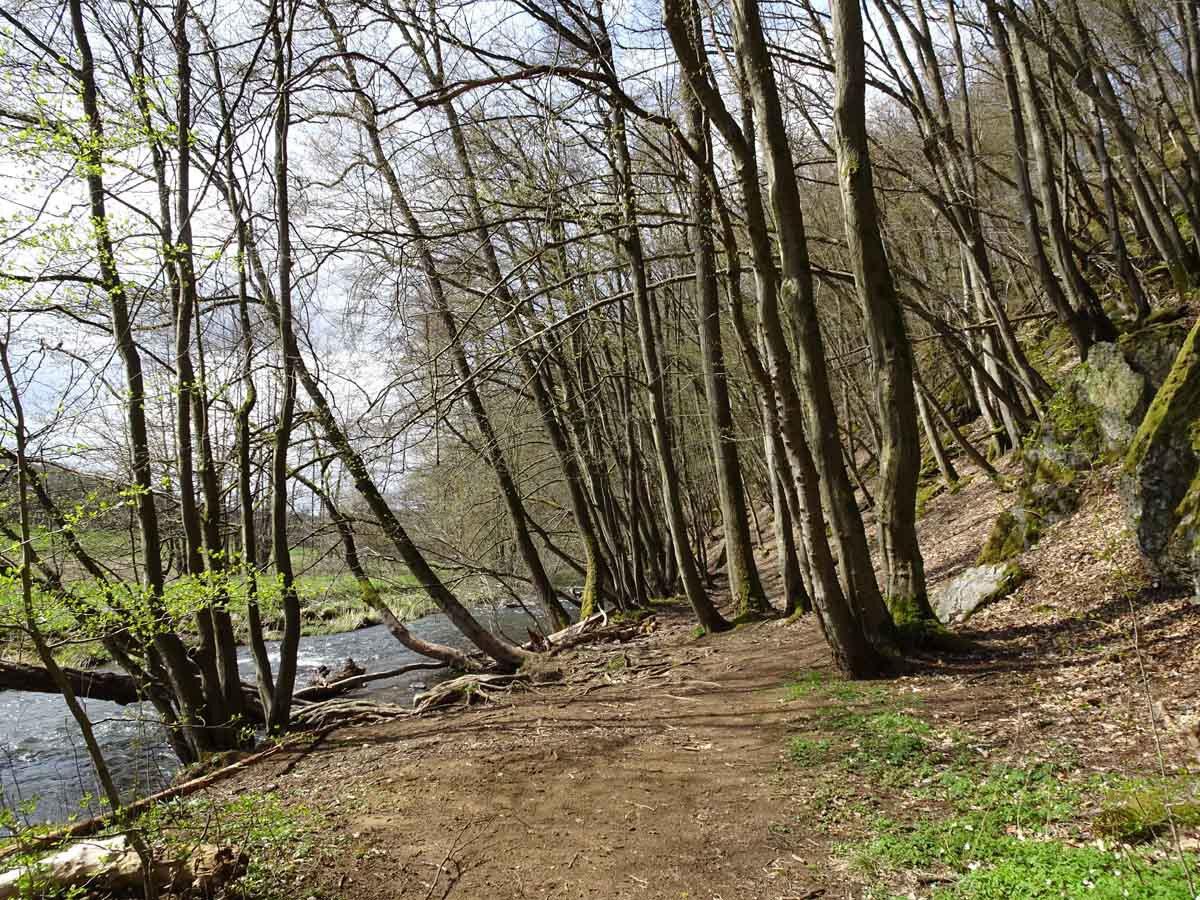 Rundwanderweg Limbach Klamm Weg an der Nister
