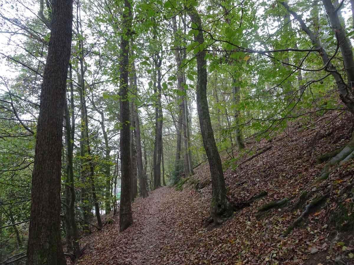 Weg hinunter zur Coenenmühle