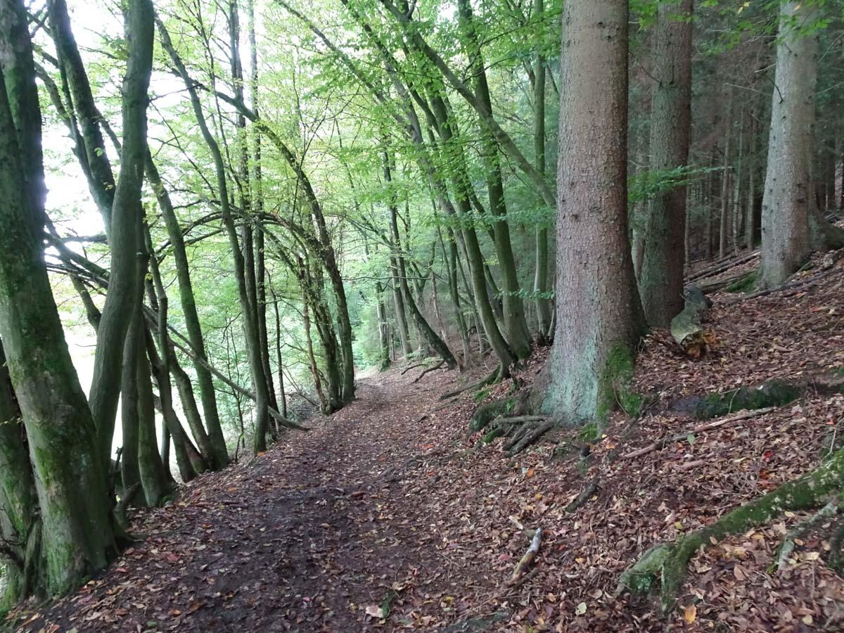 Weg im Eifgenbachtal