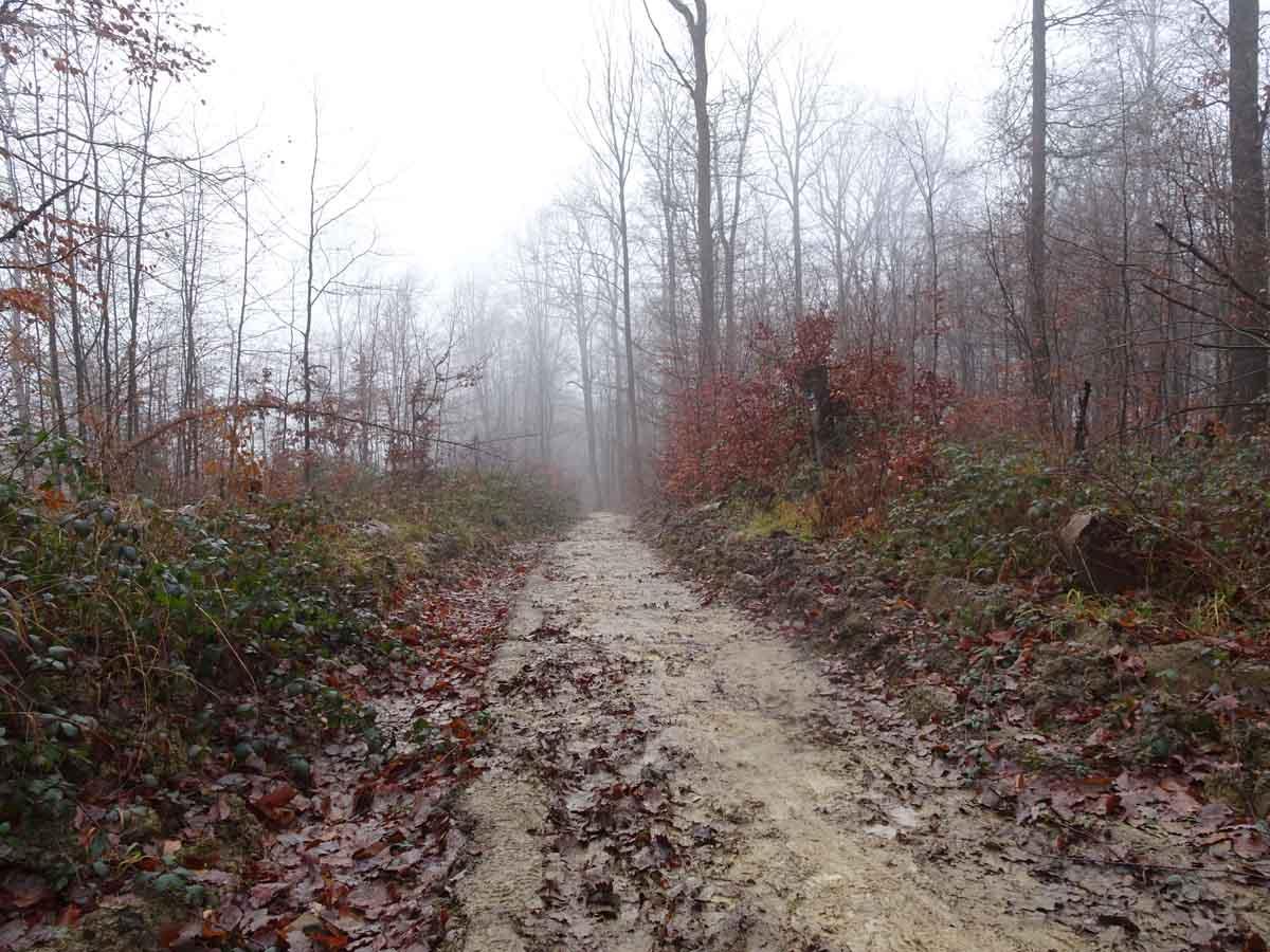 Der Wildwiesenweg 5