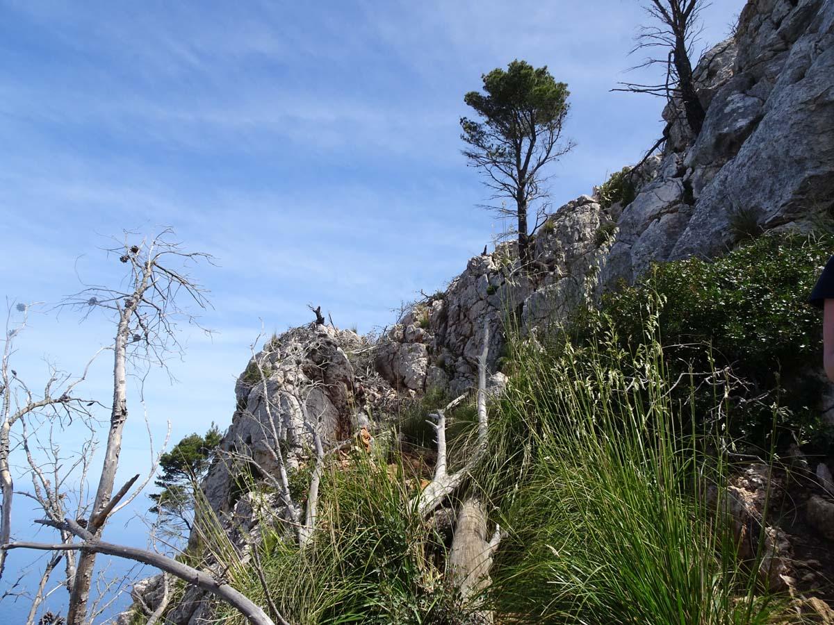 Weg mit Bäumen GR 221