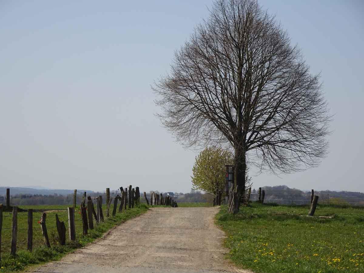 Böllweg Weg mit Baum