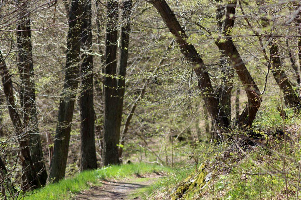 Weg nach Altenbrak 2