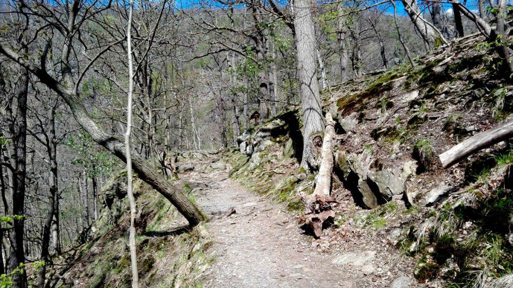 Weg nach Altenbrak 3