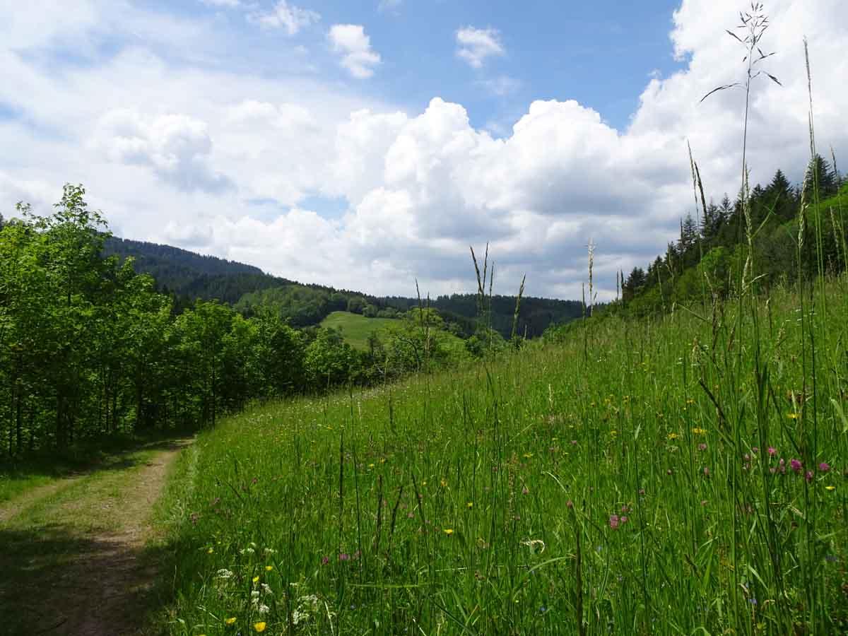 Himmelssteig Schwarzwald