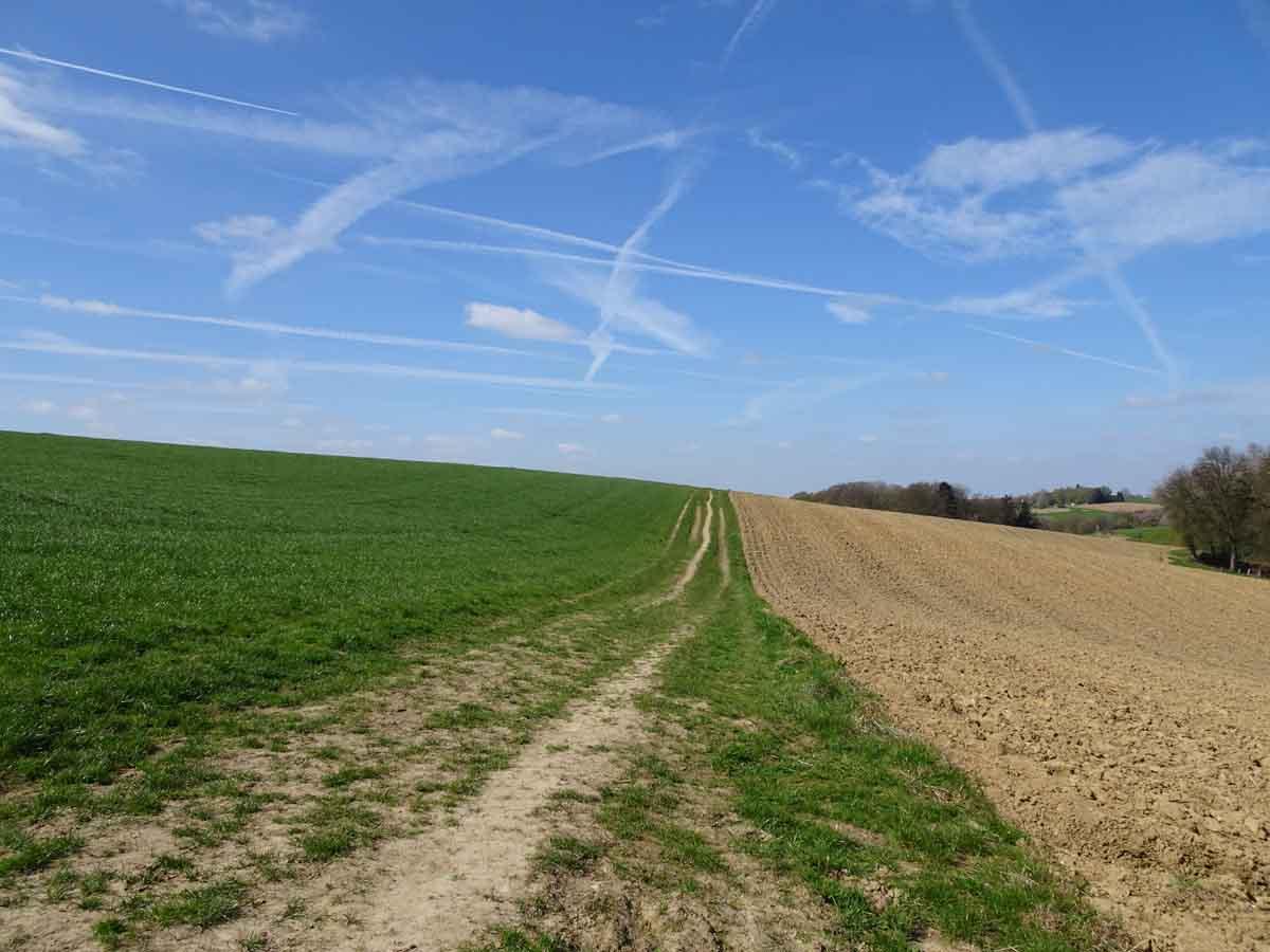 Wiesenweg auf dem Bauernhofweg