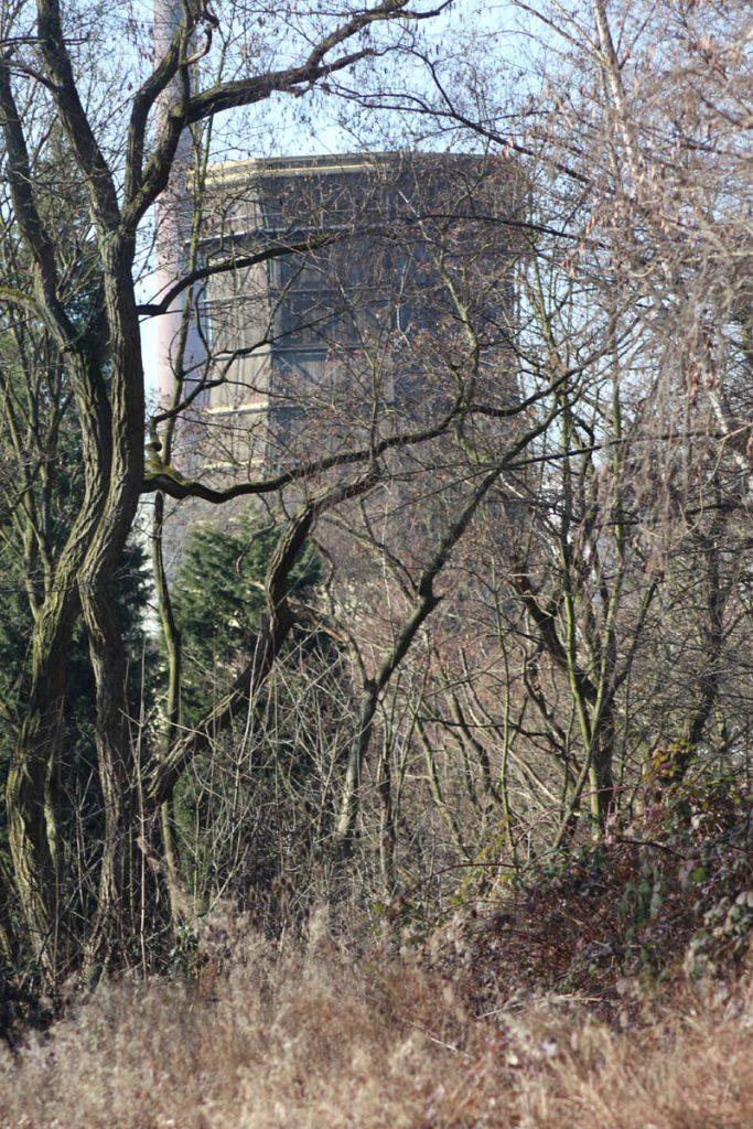 Zeche Zollverein Natur