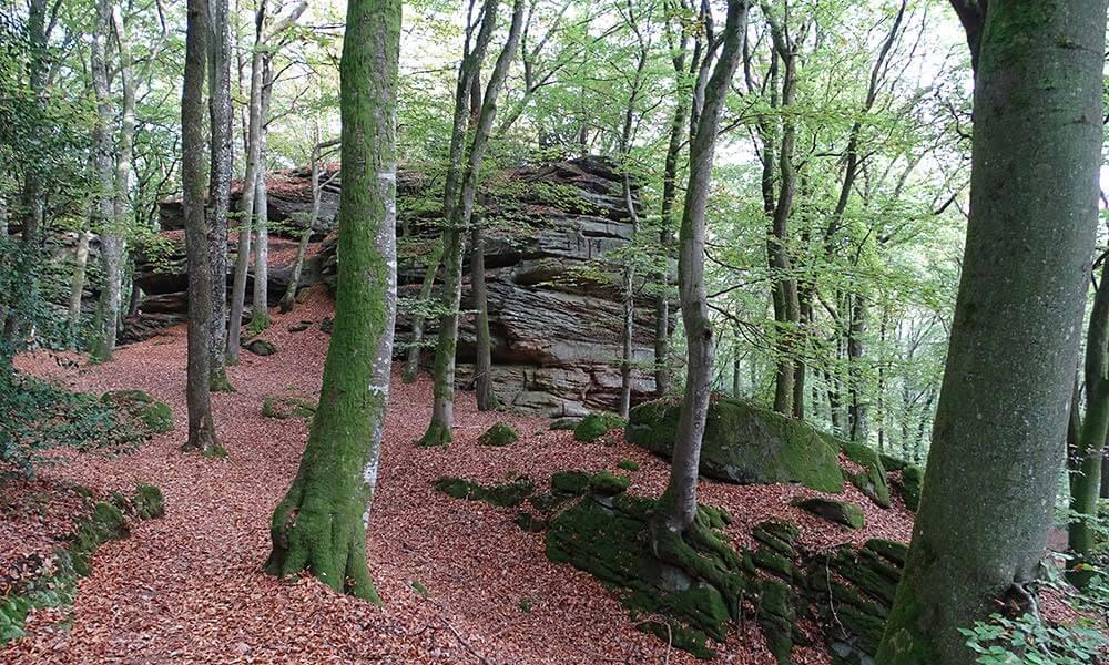 Round up Eifel: 7 Blogger verraten ihre Lieblingswanderwege 4
