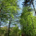 Köln: 4 Ausflugsziele in die Natur 2
