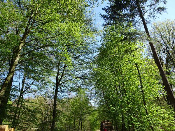 Köln: 4 Ausflugsziele in die Natur 8