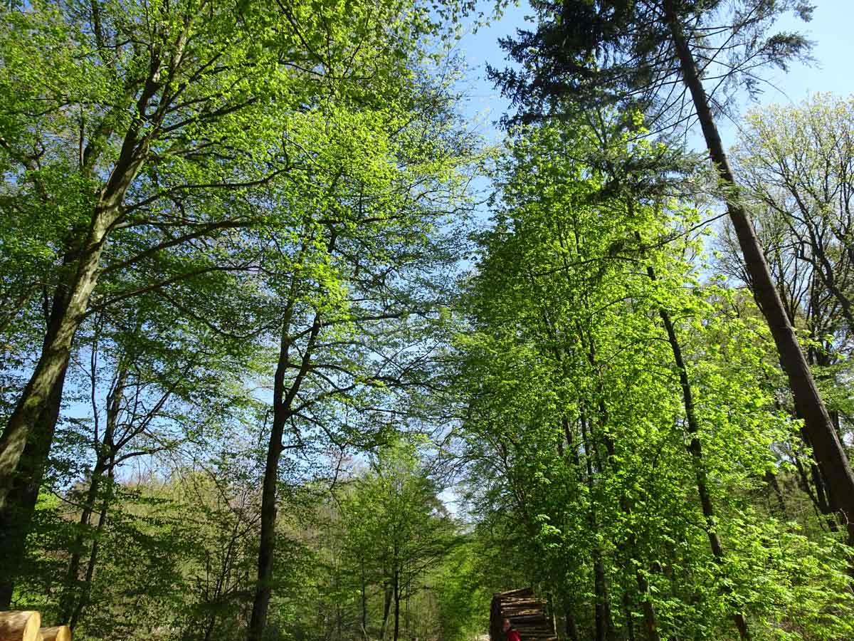 Köln: 4 Ausflugsziele in die Natur 1